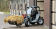 Weidemann telehandler T4512 application with bucket